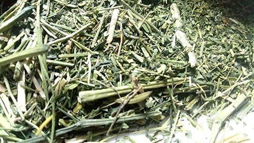 Indian Origin Chirata Herb