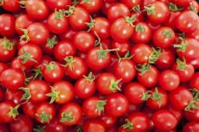 Fresh Cherry Tomatoes For Cooking Preserving Compound: Cool And Dry Place