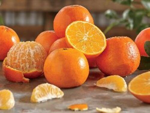 Natural Fresh Orange Fruits Cultivation Type: Common