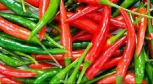Red & Green Teja Chilli for Food