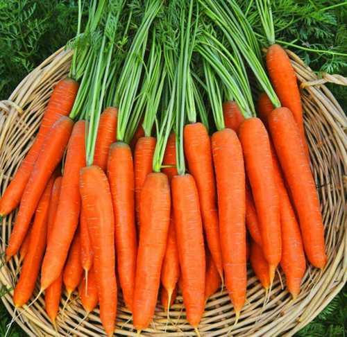 A Grade Fresh Carrot