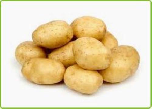 A Grade Fresh Potato for Cooking