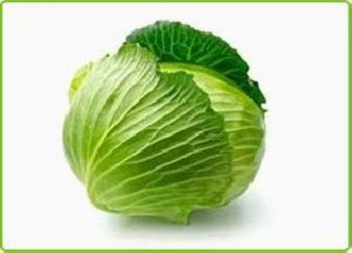 Fresh Green Cabbage for Cooking