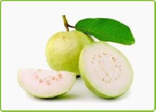 Fresh Green Guava Fruits