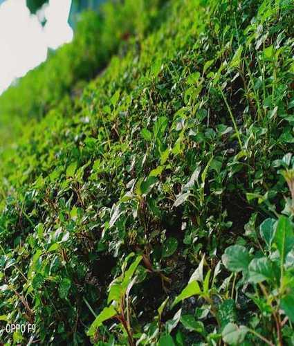 Best Price Fresh Spinach