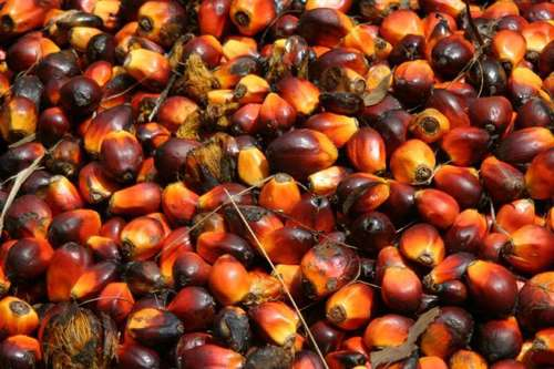 Cracked Palm Kernel Shell Nuts