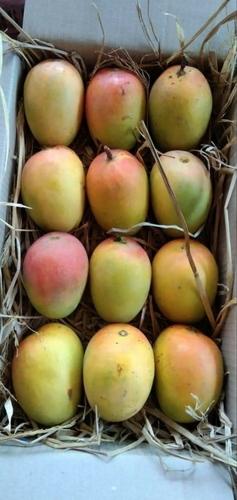Farm Fresh Ratnagiri Mango Fruit