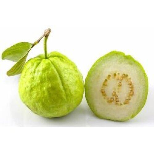 Fresh Green Guava Fruits
