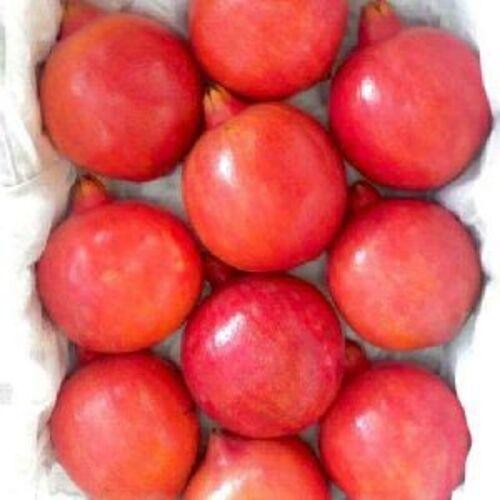 Fresh Organic Pomegranate Fruits