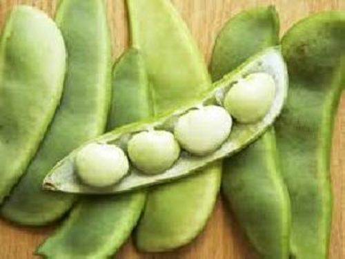 Fresh Lima Beans for Cooking
