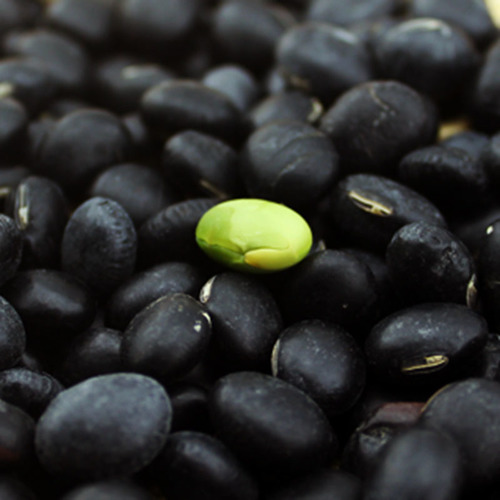 Black Bean With Yellow Kernel