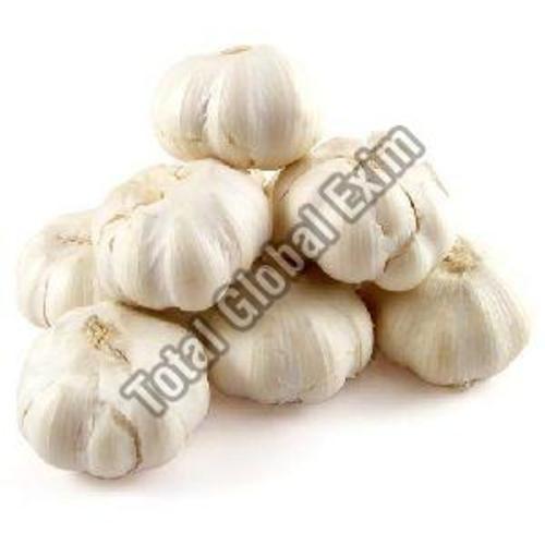 Fresh White Garlic For Food