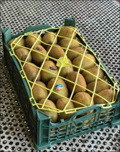 Fresh Natural Kiwi Fruits