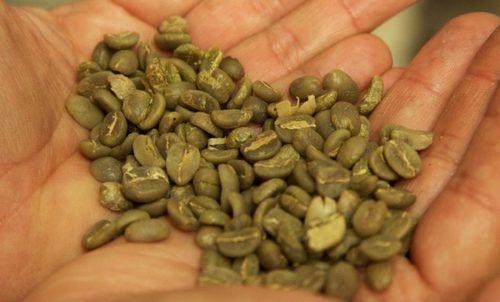 Organic Raw Coffee Beans