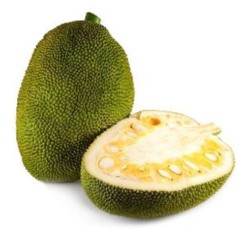 Fresh Green Jackfruit For Cooking Preserving Compound: Cool And Dry Place