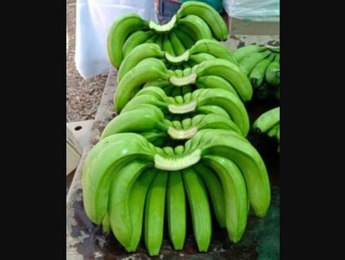 Farm Fresh Green Bananas