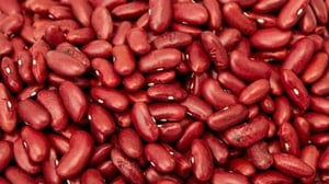 Red Dried Kidney Beans