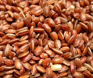 Organic And Raw Red Rice