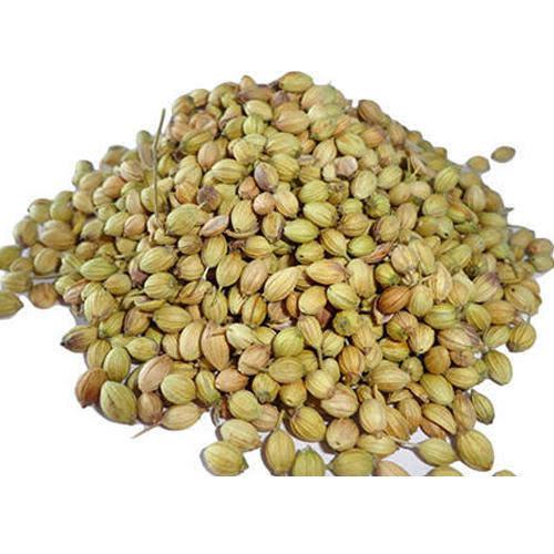 Sun Dried Coriander Seeds
