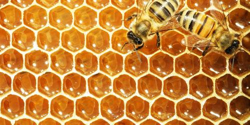 Fresh Raw Mature Comb Honey