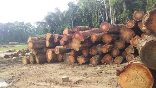 High Grade Bosse Wood
