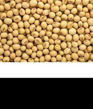 Wholesale Price Soya Beans