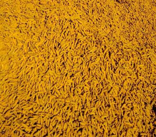 Piece Natural Dried Turmeric Fingers