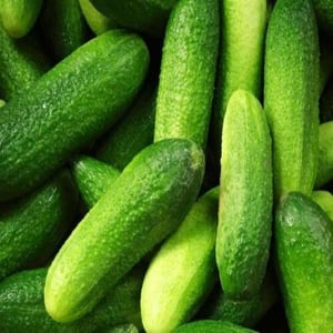 Healthy and Natural Fresh Gherkins