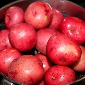 Healthy and Natural Fresh Red Potato