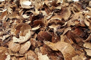 Clean Coconut Shells (Brown)