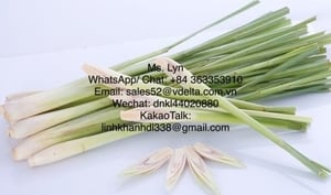 Fresh, Frozen and Dried Lemongrass with Best Price and High Quality