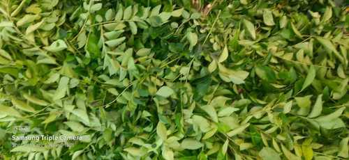 Pure Natural Curry Leaves