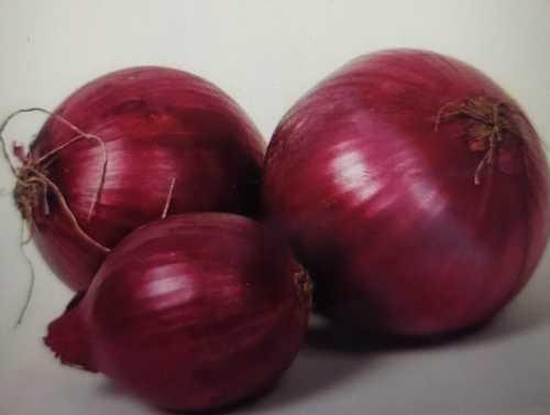 Impurity Free Red Onion