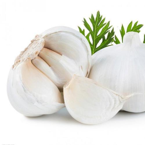 Pure White Fresh Garlic
