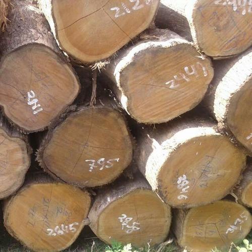 Fine Grade Wood Log