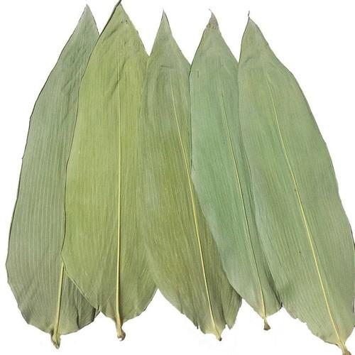 Bamboo Leaves for Making Dumplings