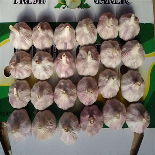 Impurity Free Natural White Garlics