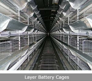 GI Layer Battery Cages