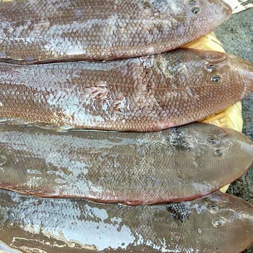 Whole Fresh Frozen Tongue Sole Fish
