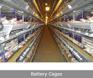 GI Wire Battery Cages