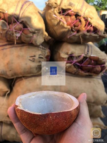 A Grade Dried Copra Coconut