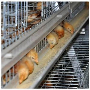 Poultry Broiler Battery Cages