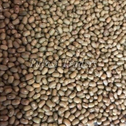 Healthy and Natural Moth Beans