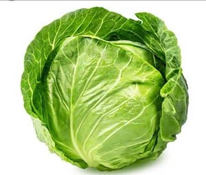 Green Organic Cabbage for Cooking