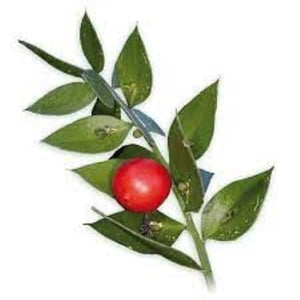 Natural Herbal Butchers Broom Plant Extract