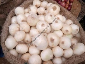 Fresh White Onion for Cooking