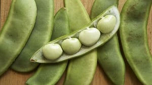 Fresh Butter Beans for Cooking