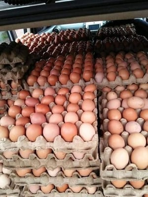 Fresh Brown Chicken Table Eggs In Trays and Carton