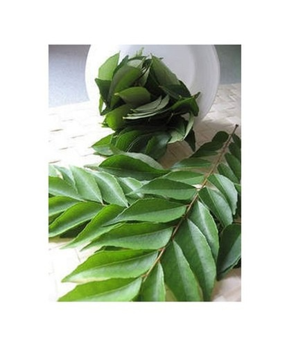 Organic Green Whole Curry Leaf For Cooking