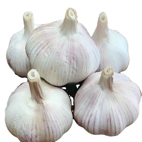 Natural White Garlic Fresh Garlic Bulb